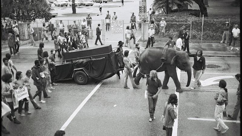 elephant-ps-gje0058-r1-e008-copy