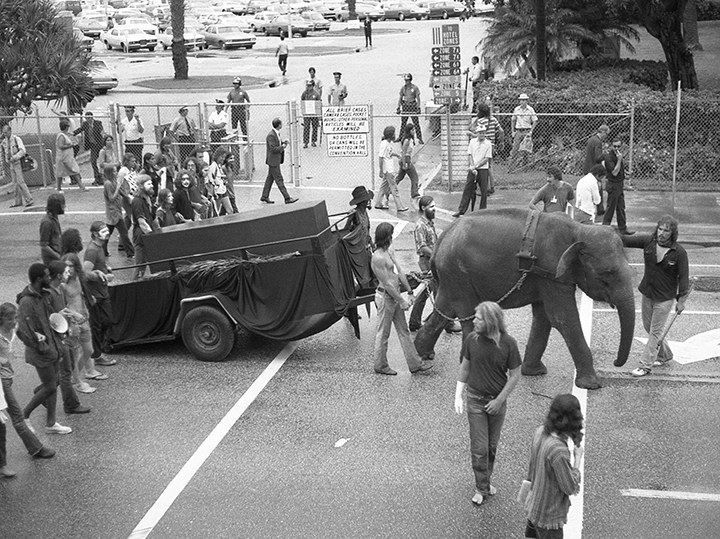 72-con-elephant015-copy